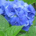 Photos: 青色がきれいです