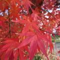 Photos: そろそろ紅葉も終わりだわ
