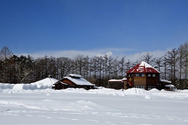 マーチと小岩井農場 180218 (8) (1600x1067)
