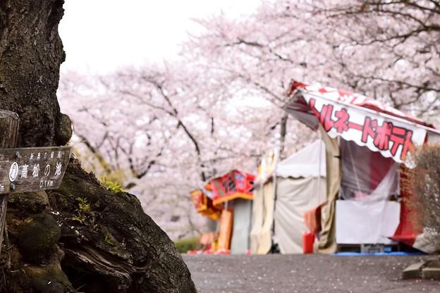 高松の池の桜まつり 180425 (2)