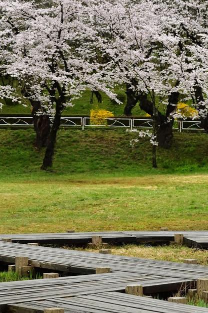 高松の池の桜まつり 180425 (3)