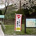 高松の池の桜まつり 180425