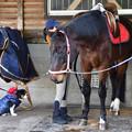 Photos: マーチと馬っこパーク