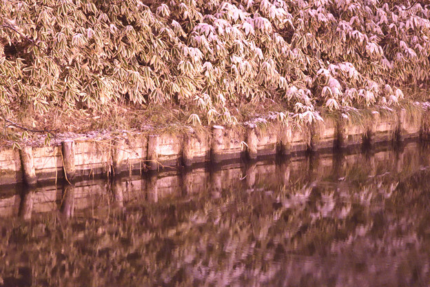 Photos: 弘前城 191225_0016