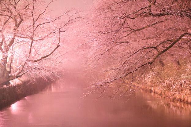Photos: 弘前城 191225