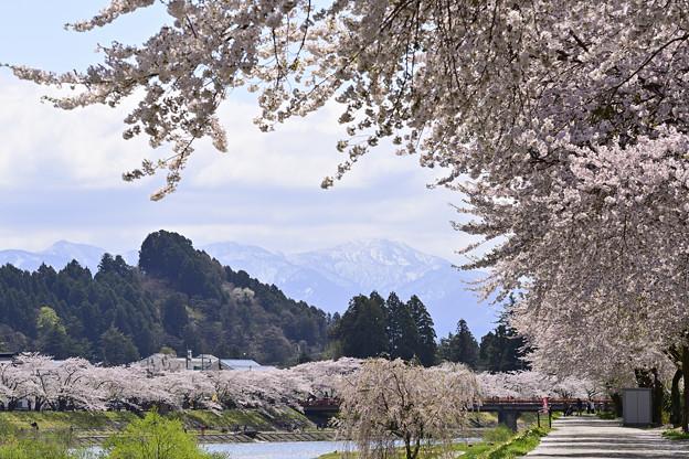 角館の桜(ひのきないがわつづり)