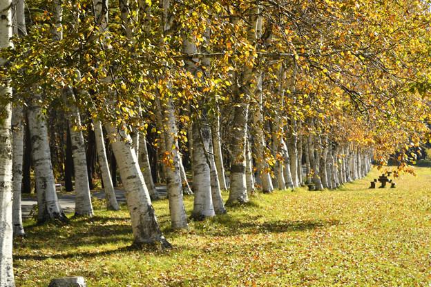 県民の森、森の大橋201021_0004_00004_00004