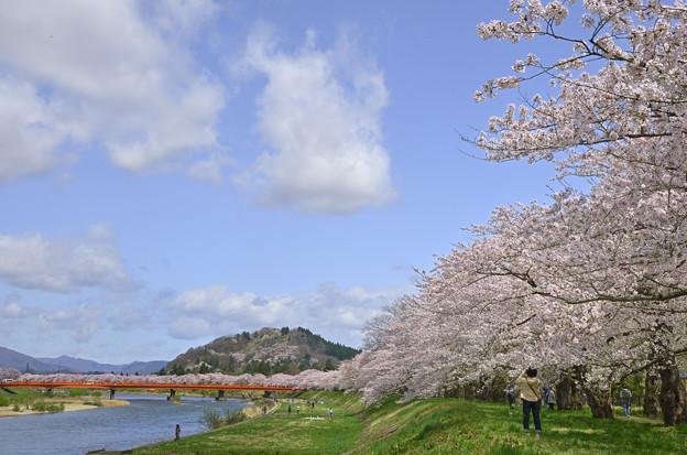 角館の桜 桧木内川(ひのきないがわづつみ)