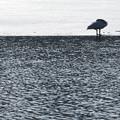 高松の池の白鳥201222_0016