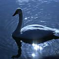 Photos: 高松の池の白鳥201222_0013