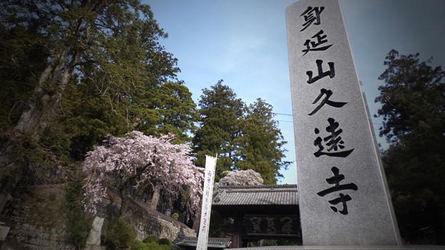 身延山久遠寺 桜
