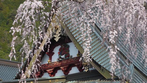 Photos: 身延山久遠寺の桜