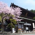 Photos: 身延山久遠寺三門の桜