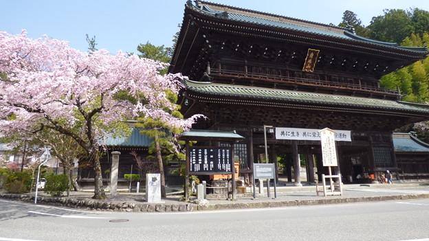 身延山久遠寺三門の桜