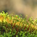 写真: 陽気な苔たち