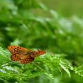 写真: 蝶
