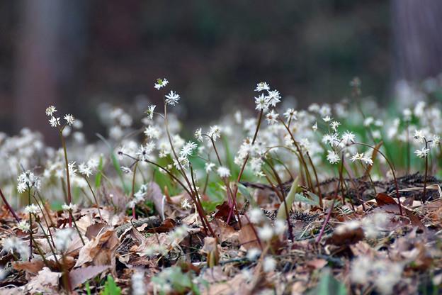 写真: 小さな春ここに