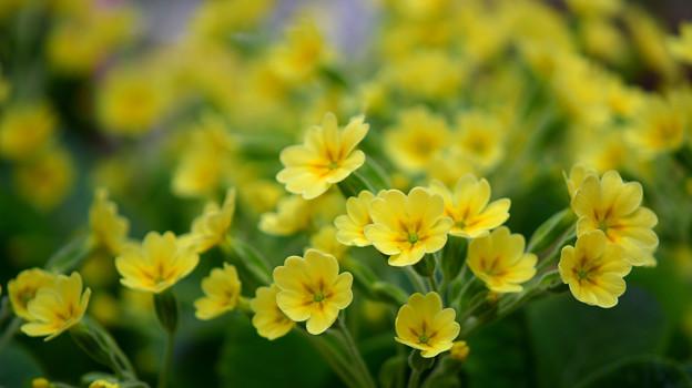 Photos: 黄色フィーバー