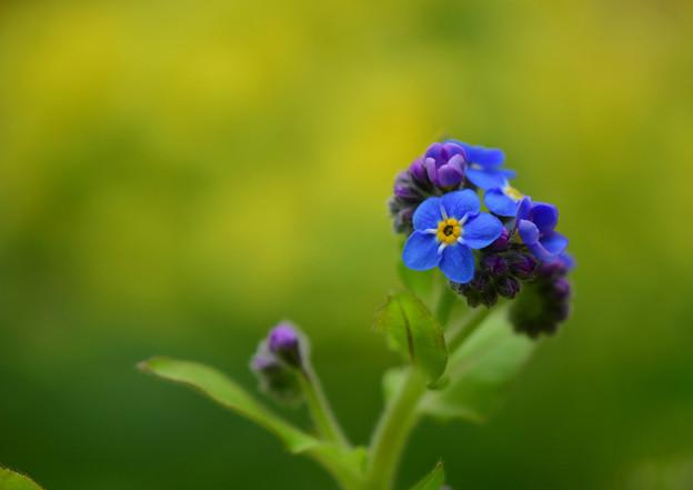 写真: 春・忘れないで・・