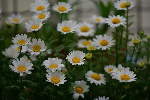 写真: 庭の花