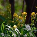 写真: 雑木林の黄色