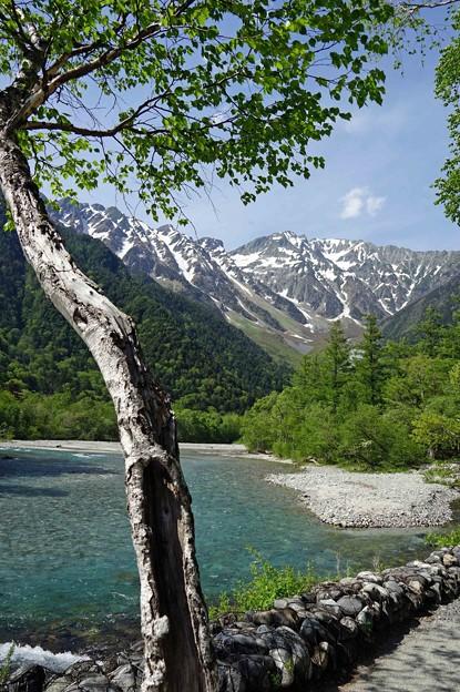 Photos: 白樺と穂高岳
