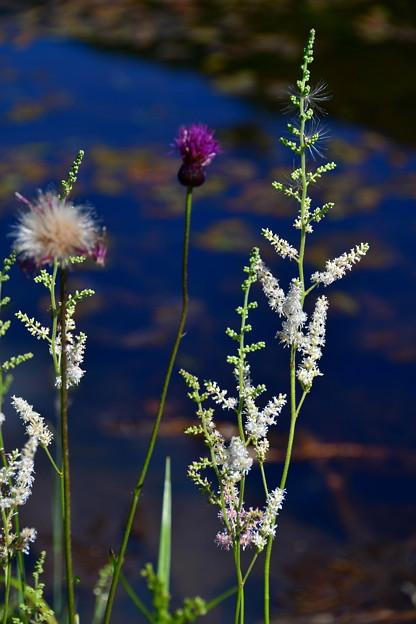 写真: 池のほとりで