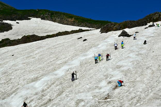 写真: 夏だ! スキーだ!