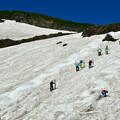 Photos: 夏だ! スキーだ!