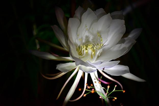写真: 咲きました~♪