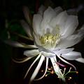 Photos: 咲きました~♪