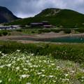 写真: イワツメクサとバスターミナル方向