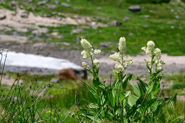 Photos: 小さな花が穂のようにつく