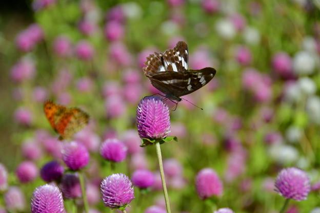 写真: 蝶さんの遊ぶところ