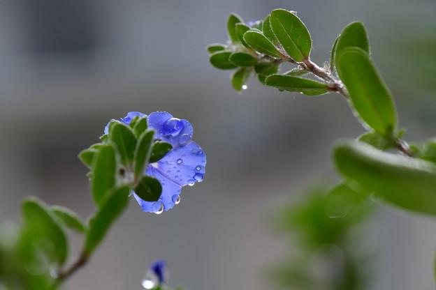 写真: 最後のブルーに・・