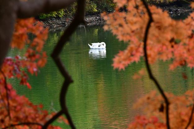 Photos: 静かなひととき・・・