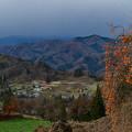 里山を眺める柿