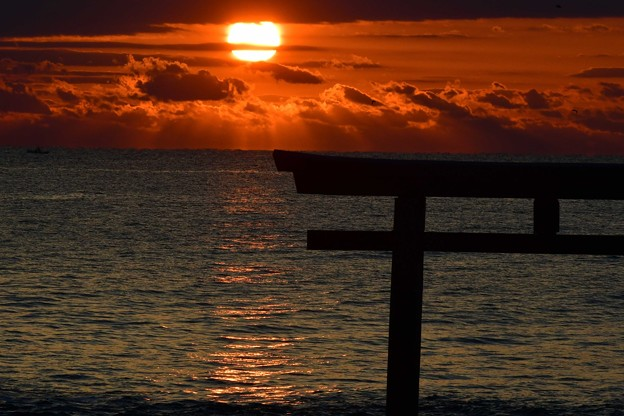 Photos: 朝です~~ギラギラ・・