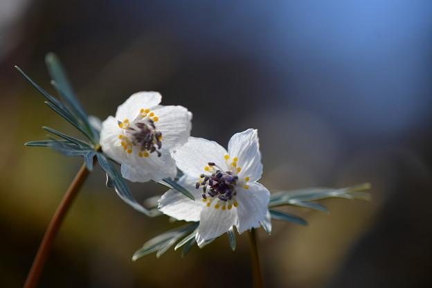 写真: 春を喜ぶ・・小さな命!