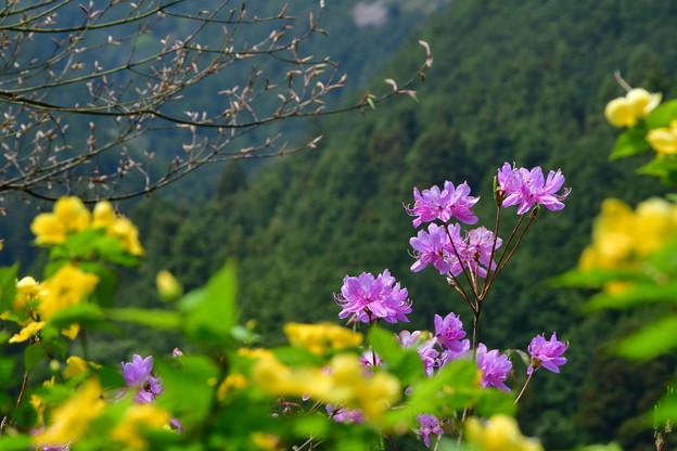 Photos: 里山のピンク