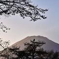 富士山眺める鳥