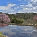 Photos: 水田に映る天王桜
