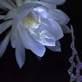 大きな花・小さな花