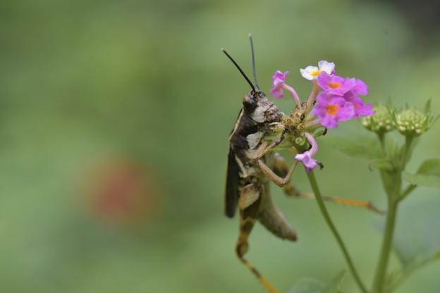 Photos: 花の命は・・・