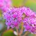 Photos: 庭の花