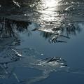 Photos: キラキラ・・薄氷を眺めて