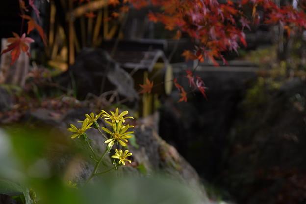 Photos: 元気な黄色!