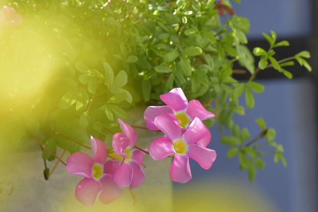 Photos: 桃の輝き