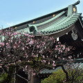 Photos: 総門の梅