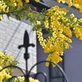 Photos: 黄色が満開!